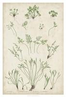 Bradbury Ferns I Fine Art Print