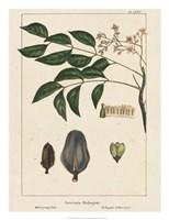 Mahogany Tree Fine Art Print