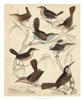 Avian Habitat VI Fine Art Print
