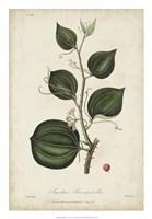 Medicinal Botany I Fine Art Print
