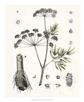 Berge Botanicals I Fine Art Print