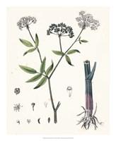 Berge Botanicals II Fine Art Print