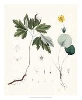 Berge Botanicals III Fine Art Print