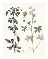 Berge Botanicals IV Fine Art Print