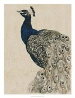 Textured Peacock II Framed Print