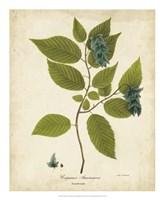 Hornbeam Tree Foliage Fine Art Print
