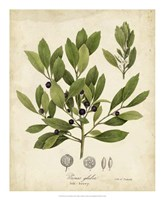 Ink-berry Tree Foliage Fine Art Print