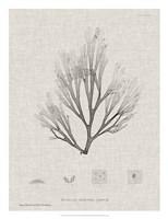 Charcoal & Linen Seaweed III Fine Art Print