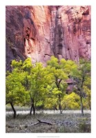 Canyon Cottonwoods Fine Art Print