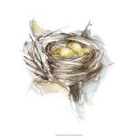 Bird Nest Study III Fine Art Print