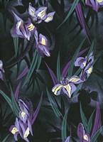 Iristif Fine Art Print