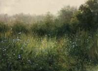 Dorset Wildflowers 4 Fine Art Print