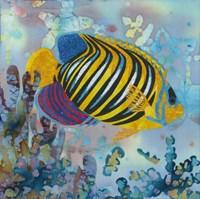 Regal Angel Fish Fine Art Print