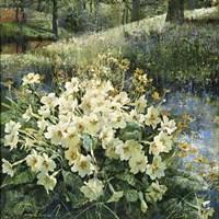 Primroses in Water Fine Art Print