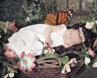 Fairy Dreams Fine Art Print