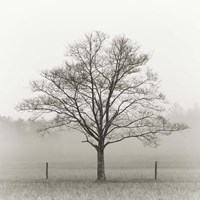 Winter Tree, Cades Cove Fine Art Print