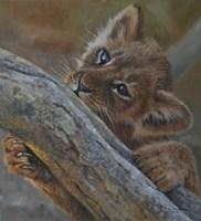Play Lion Cub Fine Art Print