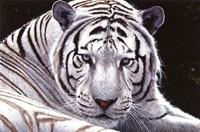 White King Fine Art Print