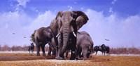 King Of Marabou Pan Fine Art Print
