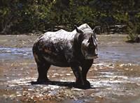 White Rhino Fine Art Print