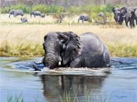 Elephant, Okavango Delta Fine Art Print