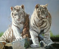 White Tiger Cubs Playing Fine Art Print