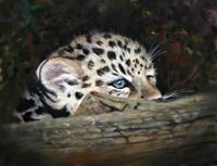 Peekaboo Amur Leopard Cub Fine Art Print