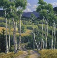 Summer Aspen Fine Art Print