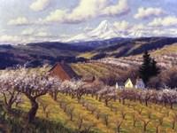 Hood River Orchard Fine Art Print