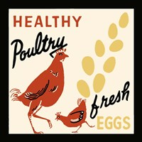 Healthy Poultry-Fresh Eggs Fine Art Print