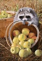 Apple Harvest Fine Art Print