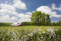 Flowers & Farm, Holmes County, Ohio 10 Fine Art Print