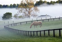 Horses in the Mist #3, Kentucky 08 Fine Art Print