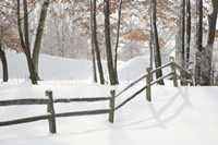 Winter Fence & Shadow, Farmington Hills, Michigan 09 Fine Art Print
