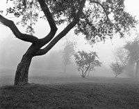 Morning Mist, Farmington Hills, Michigan 82 Fine Art Print