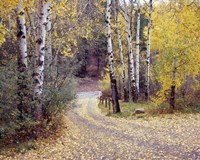 Birch Tree DriveFence & Road, Santa Fe, New Mexico 06 Fine Art Print