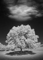 Lone Tree & Cloud, Green Bay, Wisconsin 12 Fine Art Print