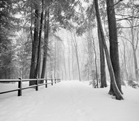 Winters Path Fine Art Print