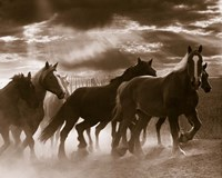 Running Horses And Sunbeams, Rothbury, Michigan Fine Art Print