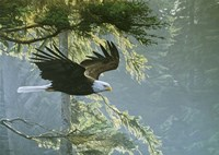 Forest Flight / Eagle Fine Art Print