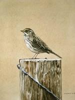 Savannah Sparrow Fine Art Print