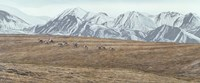 Northern Skyline - Caribou Fine Art Print