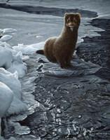 Icy Creek- Mink Fine Art Print