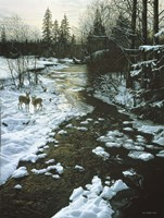 Winter Creek & Whitetails Fine Art Print