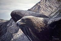 Golden Eagle 2 Fine Art Print