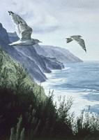 Mew Gull Fine Art Print