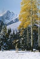 Trembling Aspen Fine Art Print