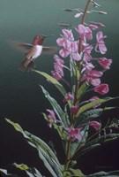 Fireweed Fine Art Print
