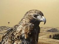 Red Tailed Hawk 2 Fine Art Print