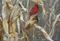 Autumn Cornfield - Cardinal Fine Art Print